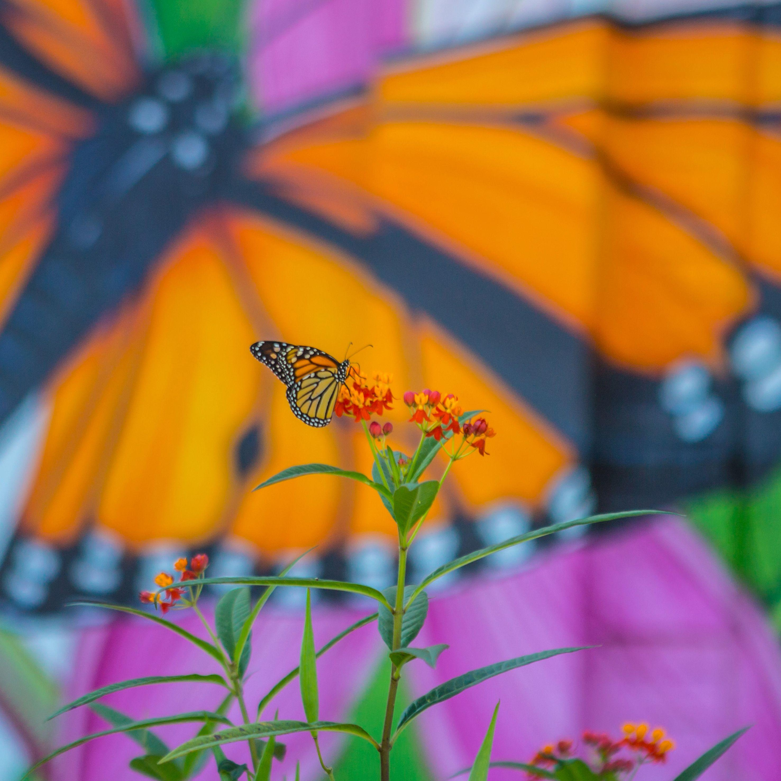 "The Nature Conservancy Alongside Lead Collaborator Full Sail University Launch ""The Monarch Initiative"" - Thumbnail"